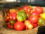Heirlooms Fresh from Our Fields