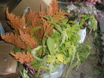 Various Amaranth