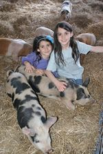 Farm camp kids get to interact with baby farm animals.
