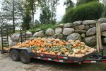 A beautiful load of winter squash and pie pumpkins is hauled to the CSA table!