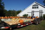 Specialty gourds, squash and pumpkins on the trailer with apprentice Hope