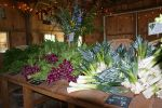 An early spring CSA table with leeks, amethyst radishes and spring greens
