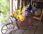 Flower share bouquets in our antique wheelbarrow