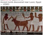 Devons in Ancient Egypt
