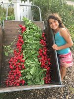 A ruby red radish harvest...