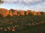 Our Pumpkin Patch 2016
