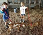 Farm Camp Kids Walk the Baby Goats