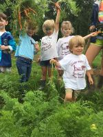 Farm Camp Kids Pick Carrots