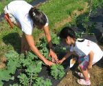 Farm Campers Learn How to Harvest Kale