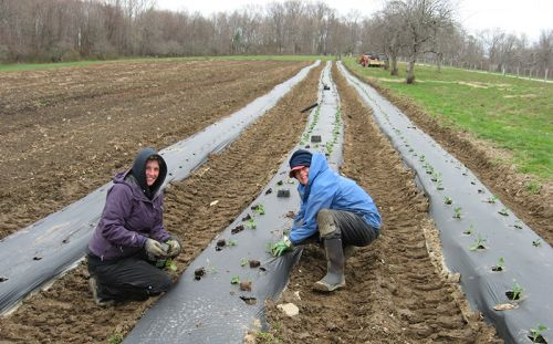 planting in the cold and rain