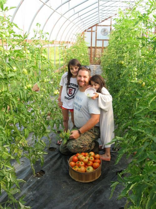 Daddy's girls harvesting Tomatoes