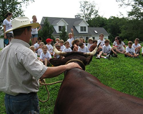 Farm Erick teaches kids about Devon Cattle at Farm Camp