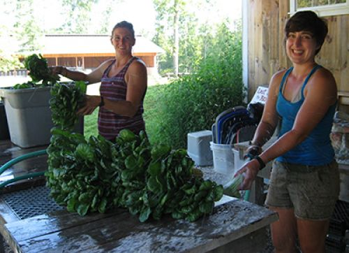 Apprentices Amy & Hope rinse field dirt from veggies
