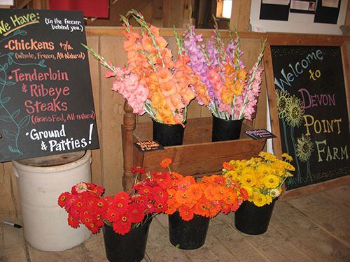 Fresh Cut Flower Stems for sale at Devon Point Farm