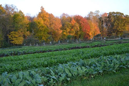 An autumn view of the fields