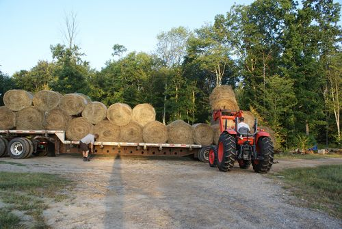 And more hay