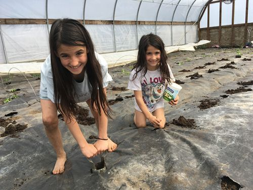 Farm Sister,Lexi and Julia planting tomato