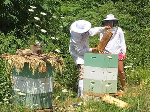 Intern Paris learning about bee's