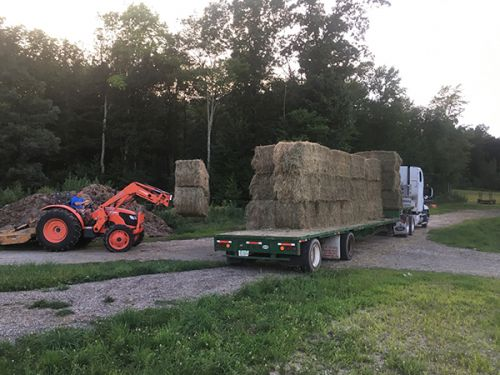 Winter Hay for cattle