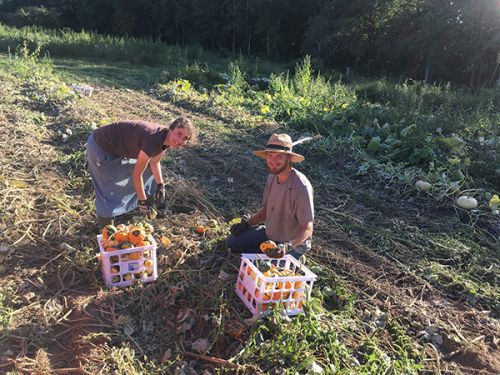 intern Olee and Elaina gleaning the Autumn fields
