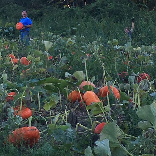 We grow specialty pumpkins