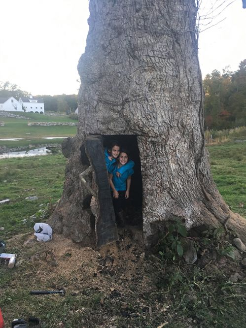 The Pooh-Bear Tree, a hollow oak with a room inside!