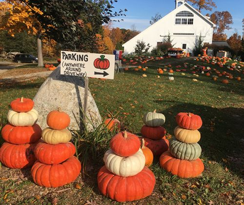 Create your Fall Pumpkin Stacks at Devon Point Farm