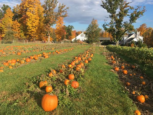 paths of pumpkins