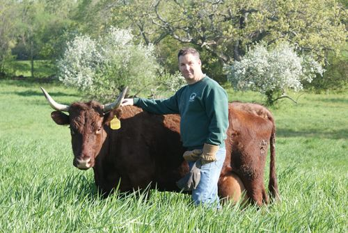 Erick with one of our Devon Cows