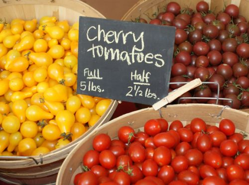 cherry tomatoes at share pickup