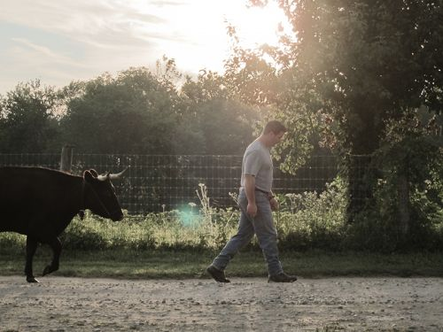 Erick walking 'Viola' out to pasture