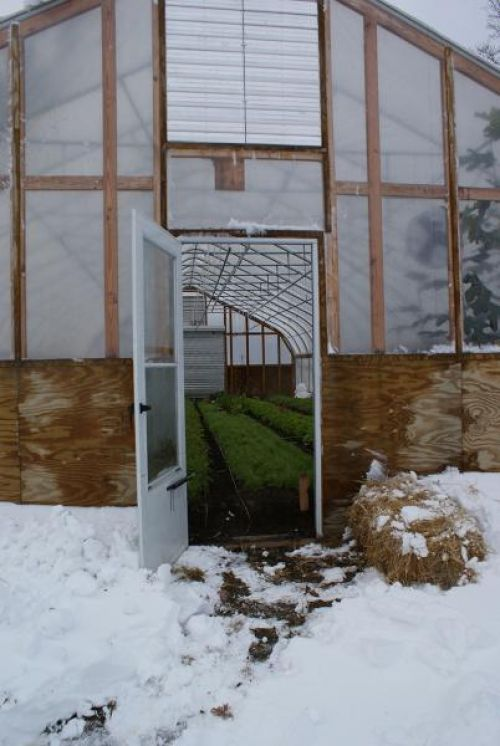 Winter greens in an unheated hoophouse all winter long!