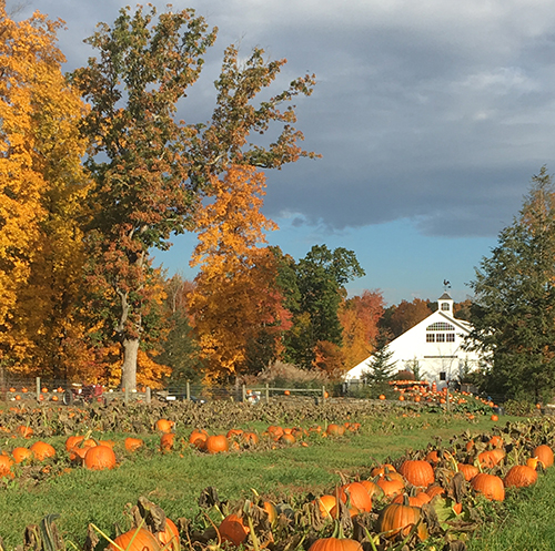 Pick Your Own Pumpkins and Raw Apple Cider at Devon Point Farm