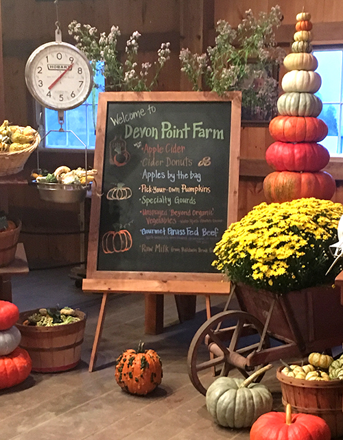Pick Your Own Pumpkins at Devon Point Farm in Woodstock CT