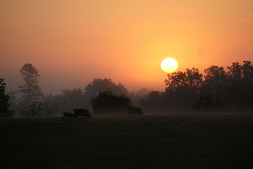 Sunrise at Devon Point Farm