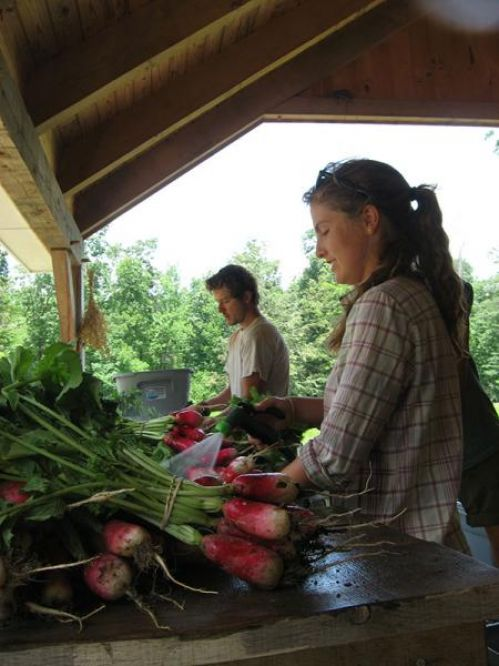 Interns prepping radishes