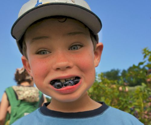young patron loves blueberries