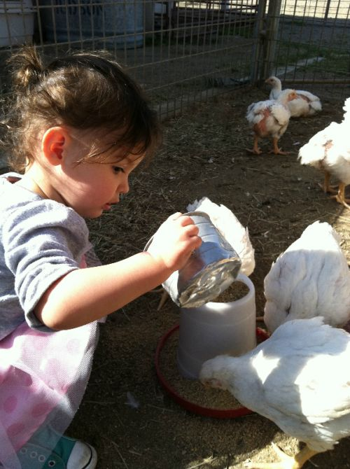 Girlie Girl Aria feed the big chicks