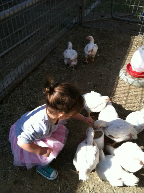 Aria meets big chicks