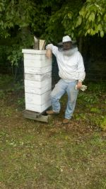 Colin is there for scale of a larger hive. Very productive hive in a sourwood beeyard
