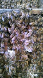 Bees hard at work