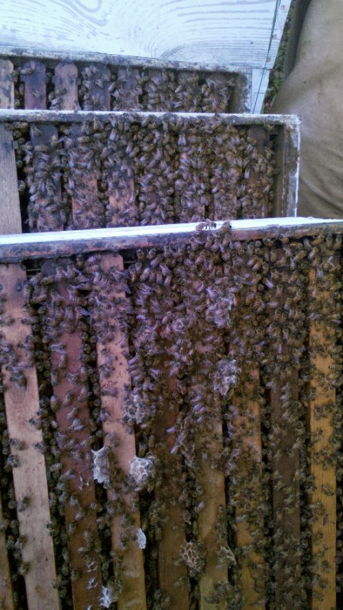 A few honey supers almost ready for honey extraction