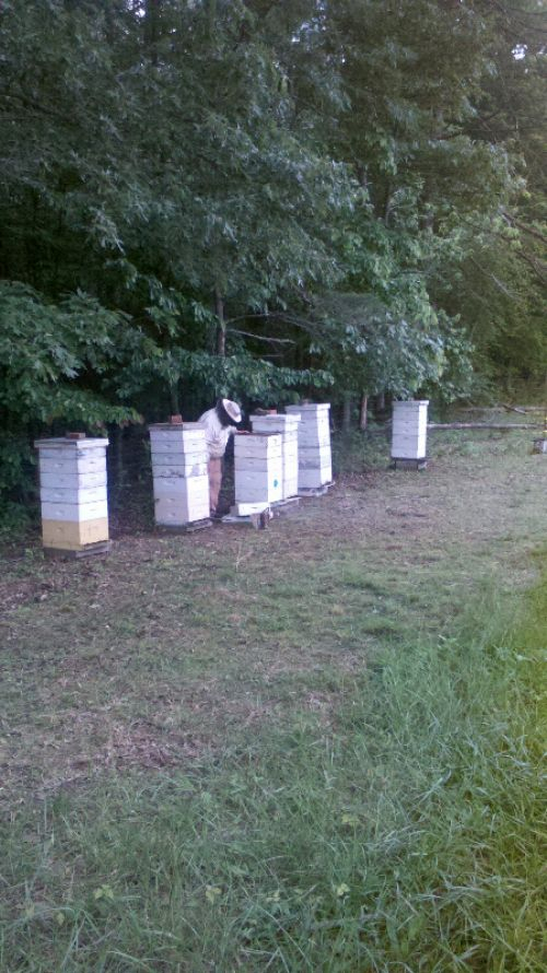 One of many bee yards