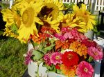 Zinnias and; Sunflowers