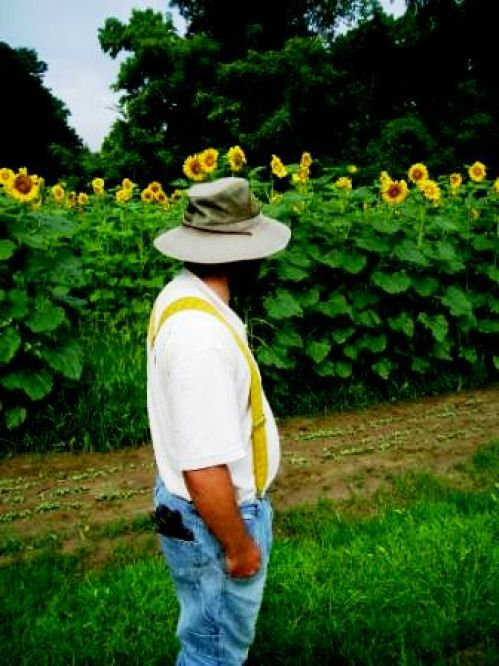 Checking out the sunflowers