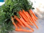 Some of our winter carrots