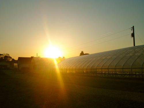Sunset over the hoophouse
