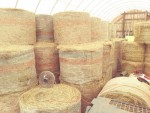 Hay is in the barn!
