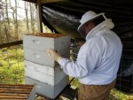 Hazy Hollow checking beehives