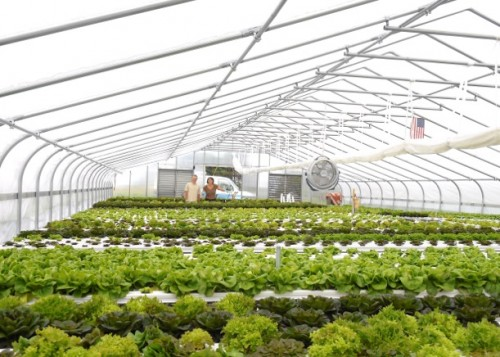 Harmony Grove Farm's greenhouse